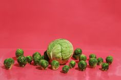 Promoting the best visual artists Chow Chow, Lazy, Color Schemes, Cabbage, Mom, Vegetables, Green, Photography, Weird