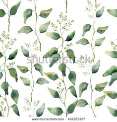 Image result for seeded eucalyptus