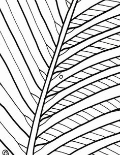 Palm tree coloring page beach art digital by adultcoloringbook
