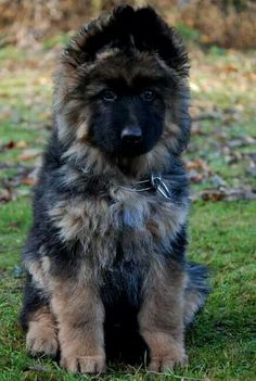 I wanna cuddle with this puppy! SO Fluffy! \