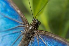 Butterfly by Noah Rosen on 500px
