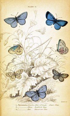 Posted by Elizabeth Golden   Labels: butterflies, freebies