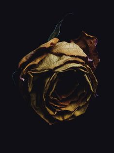 Billy Kidd decaying flower photography