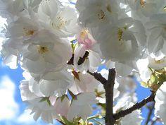Blossom by Matthew Tulett, via Flickr