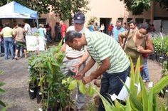 Plantio de mudas contribui para aumento da área verde em Uberlândia   FarolCom
