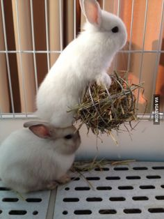 Everybunny needs a helping hand - er, head - once in awhile!                                                                                                                                                                                 More