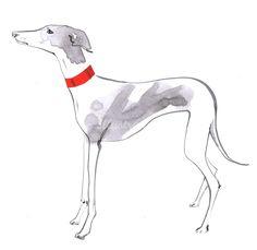 Jacqueline Bissett Illustration Portfolio – Hand Drawing Fashion Illustrator and Artist Animal Drawings, Art Drawings, Jacqueline Bissett, Greyhound Art, Portraits, Drawing Artist, Creature Design, Dog Art, Illustration Art