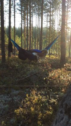 Levollista unta metsän siimeksessä. Kadehdittavat unenlahjat!
