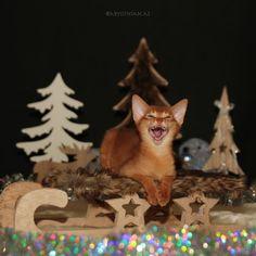 Advent, Kitty, Cats, Happy, Instagram Posts, Animals, Gatos, Animais, Happy Happy Happy