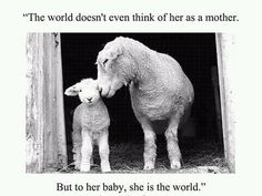 stop paying for them being killed! don't you see that no sentient being deserves that?