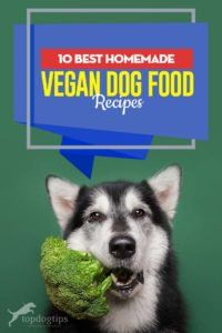 Feeding your dog a high-quality vegan dog food can be hard since there aren't many commercial vegan foods available for you to choose. Making homemade vegan dog food recipes yourself is often the only choice, and below are some of the better ones. Vegan Dog Food, Vegetarian Dog Food Recipe, Food Dog, Puppy Food, Vegan Foods, Vegan Vegetarian, Dog Biscuit Recipes, Dog Recipes, Raw Food Recipes