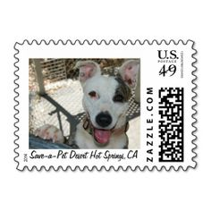 ==>Discount          	Animal Shelter Fundraiser Postage Stamps           	Animal Shelter Fundraiser Postage Stamps In our offer link above you will seeReview          	Animal Shelter Fundraiser Postage Stamps please follow the link to see fully reviews...Cleck Hot Deals >>> http://www.zazzle.com/animal_shelter_fundraiser_postage_stamps-172437115054643946?rf=238627982471231924&zbar=1&tc=terrest