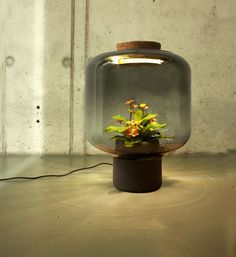 Lamps that grow plants without sunlight or water