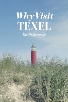 What to do and why you should visit the Dutch island of Texel