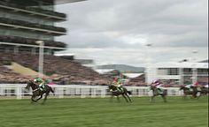 Buveur D'Air too slick for Champion Hurdle rivals  https://www.racingvalue.com/buveur-dair-too-slick-for-champion-hurdle-rivals/