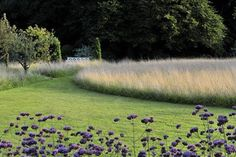 Meine Vision wird Garten: Ganzjährig attraktiv - mit nachhaltigen Pflanzkonzepten für jeden Standort: Amazon.co.uk: Peter Janke, Jürgen Becker: Books