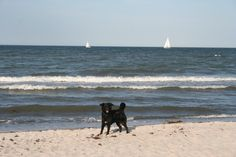 Urlaub mit und für Hund und Herrchen