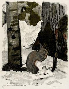 Ecureuil à sa cache à provisions 24.4.1954, Forêt vierge de Korkova Uvala (Croatie)  Robert HAINARD  Gravures 36 x 27,7 cm squirrel