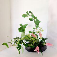 Ohara style Ikebana  Moribana Slanting style 小原流 生け花 盛花 傾斜型