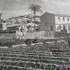 MURCIA año 1956 (refAP) Recorte