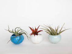 Set of 3 sea urchin ceramic planters/ air planter/ succulent