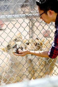 Get up close and personal with the MGM lions at their full time home and sanctuary is a fun way to spend a day. They also have 2 zoos (The Las Vegas zoo is small and wonderful we've been there but not to the new one...yet