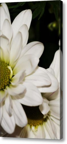 Overlapping Acrylic Print By Laurie Pike
