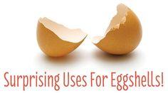 15 Surprising Uses For Eggshells... http://www.diyhomeworld.com/15-surprising-uses-for-eggshells/