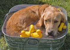 Essentials for your dog to stay cool in the summer