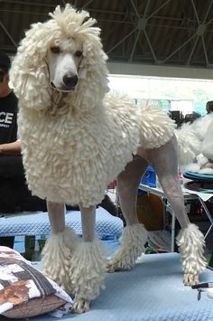 Discover The Active Poodle Puppies Grooming Poodle Cuts, Poodle Mix, Poodle Puppies, Poodle Grooming, Pet Grooming, Poodle Haircut Styles, Poodle Hairstyles, Small Poodle, French Dogs