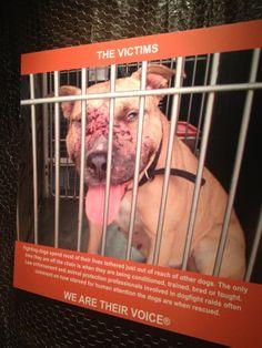 aspca dog fighting | sad image used in the ASPCA's dog fighting exhibit.
