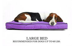"Venus Rectangle Pet Bed For Large Dog - Replaceable Waterproof Durable Washable Chew Resistant Cover - 27""x36"" (Purple) >>> See this great image @"