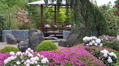 Oosterse tuin in de appeltern. Prachtige bloemen met felle kleuren!