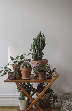 Fine Little Day / Indoor Garden Air Plants, Garden Plants, Indoor Plants, Plantas Indoor, Plants Are Friends, Boho Home, Deco Floral, Cactus Y Suculentas, The Design Files