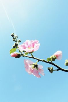 Pink flower, clear blue sky