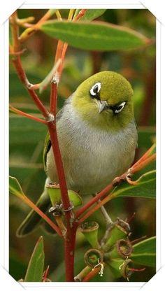 kuş ...