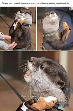 Facts! About otters.