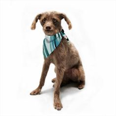 "Nina May ""Teal Brush Strokes"" Teal White Painting Pet Bandana"