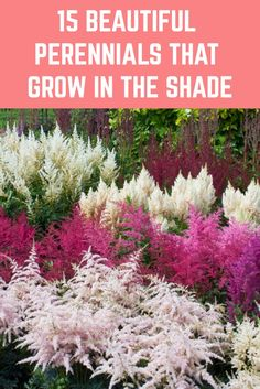 Just because an area of garden is in shade, doesn't mean it has to be boring. Here are 15 beautiful perennials to add beauty and color to your shady spots. Perennials Fabric, Shade Perennials, Shade Flowers Perennial, Flowers Perennials, Shade Garden Plants, Fall Plants, Shaded Garden, Garden Shrubs, Flowers Garden