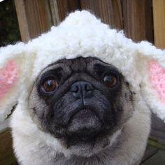 Pickles the pug...lamb, sweethoot etsy