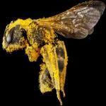 Magnificent Bee Photos