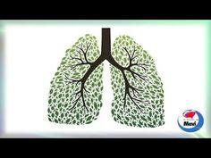 Remedios para limpiar los pulmones | Sentirse bien es facilisimo.com