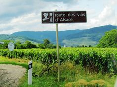 Rota dos Vinhos da Alsácia - França - Viagem com Sabor