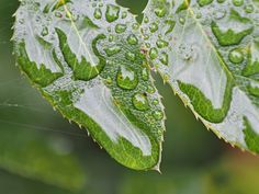 Raining drop, garden