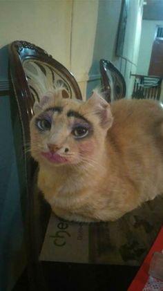 Gato maquillaje Frida Kahlo