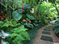 14 tropical plants to create a tropical garden in cold climates . - 14 tropical plants to create a tropical garden in a cold climate - Patio Tropical, Tropical Garden Design, Tropical Landscaping, Garden Landscape Design, Landscaping Tips, Tropical Plants, Garden Landscaping, Landscaping Software, Luxury Landscaping