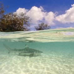 Heron Island, Queensland, Australia - One of the things I love most...