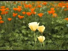 """You"" by Rita Coolidge"