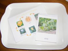 Homeschool Escapade: Pumpkin Trays