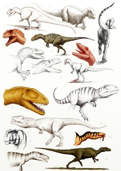 allosauroids - sketches by Apsaravis on DeviantArt